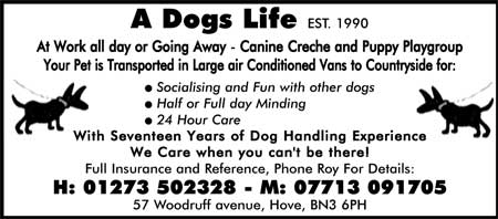 dog walking - dog handling