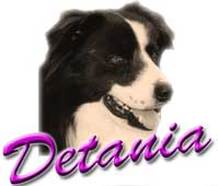 collie dog breeders