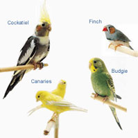 pet sales - birds