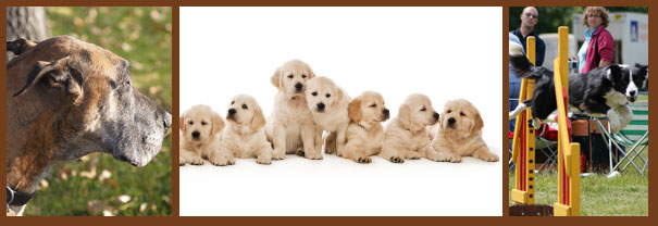 dog breeders, groomers and trainers